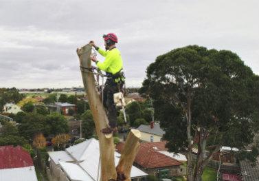 redback-tree-services
