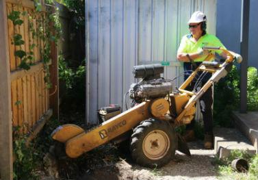 redback-tree-services2